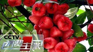 《消费主张》 20190524 水果里的消费升级:牛奶莲雾你吃过吗?| CCTV财经