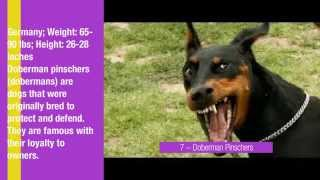 10 Most Dangerous Dog Breeds