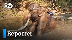 Elefantenreiten: Touristenspaß oder Tortur? | Reporter
