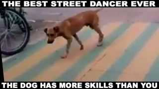 Dancing Dog Best Street Dancer Ever   Trance Remix