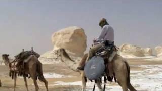 white desert camel caravan