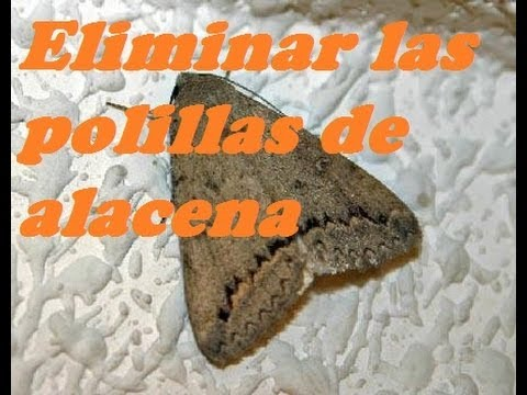 ELIMINAR LAS POLILLAS DE ALACENA Delete the moths of
