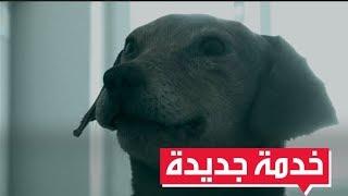 تحنيط الحيوانات الأليفة خدمة جديدة في الصين thumbnail