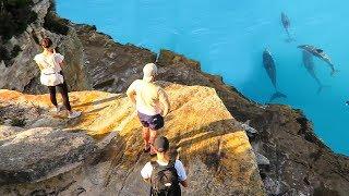ON TOMBE SUR DES DAUPHINS SAUVAGE SUR CETTE PLAGE AUSTRALIENNE... #Day5