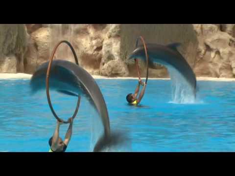 Delfines - Loro Parque