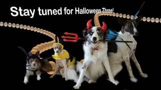Halloween Cometh! - Clicker Dog Training
