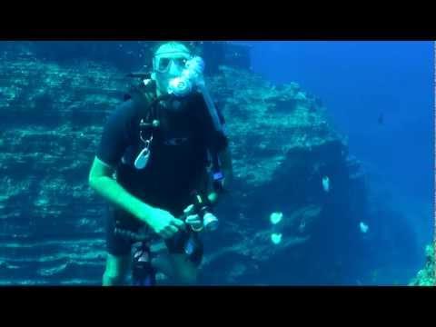 Hawaiian Reef Fish Trailer