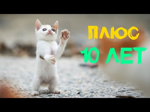 Кошки прибавляют своим владельцам за 21 января