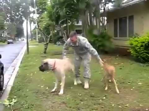 Two Big Dogs Welcome their Soldier Dad Home !