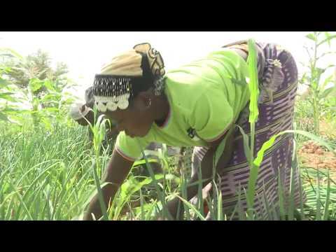 Le grenier de conservation des oignons Tilgr Baore, une innovation qui libère