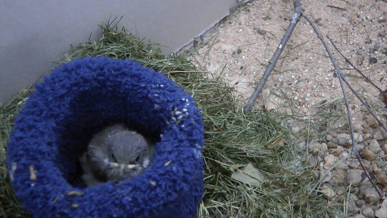 junger vogel aus dem nest gefallen youtube. Black Bedroom Furniture Sets. Home Design Ideas