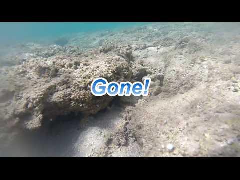 Kauai, Hawaii 2017 Day 12 - Anini Beach, Seahorse & Octopus!