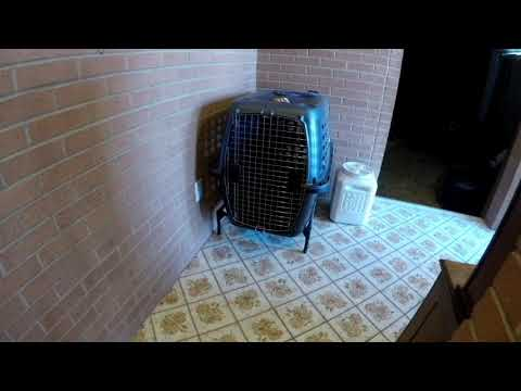 Cairn Terrier crate training