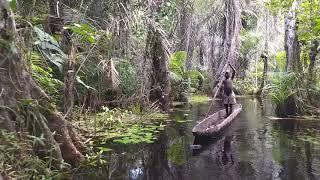 Dugout canoe in Congolese rainforest swamp. Enyelle, Likouala, Republic of Congo.