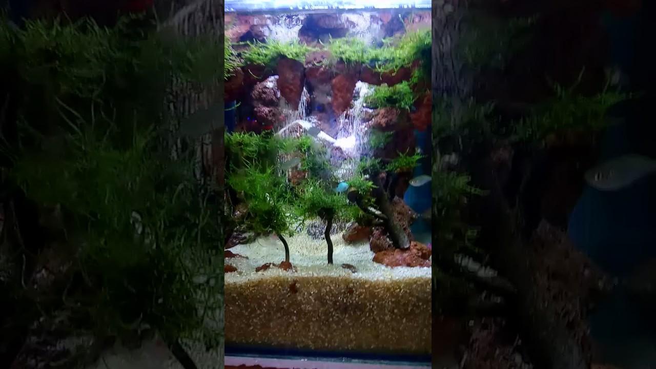 Aqua scape batu terbang - YouTube