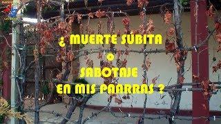 Muerte Súbita o Sabotaje en las Parras del Huerto Urbano de Luis Servia