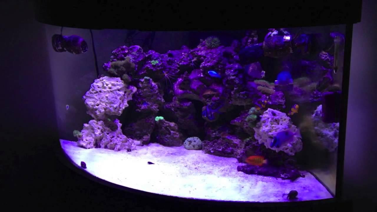 My 92 Gallon Reef Aquarium With Ecoxotic LEDs
