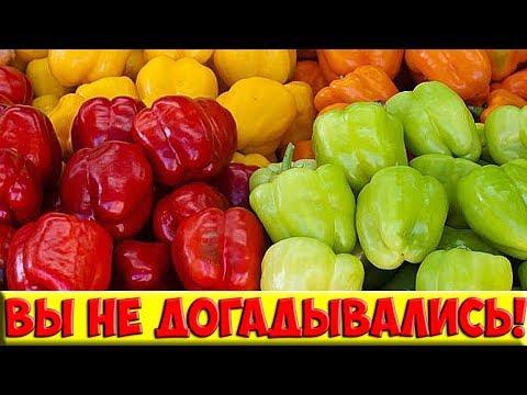 Необычные способы заготовки болгарского перца на зиму! Быстро, удобно и просто! Попробуйте!