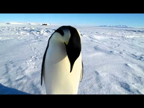 Five little penguins | 3D baby songs | five little babies | cartoon nursery rhymes for kids