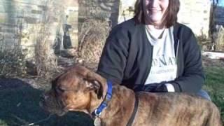 Adopt A Boxer Rescue.com.wmv