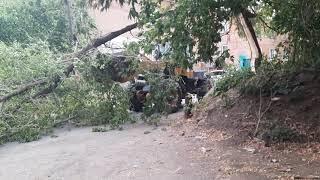 Новостной выпуск от 07.09.2021г. Ветер, ломающий деревья