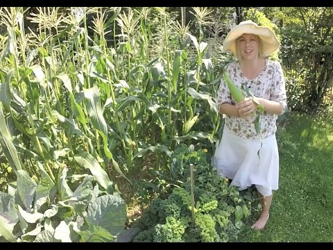gartenrundgang, august 15 (1/2) | garden tour | selbstversorger, Garten und erstellen