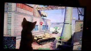 Кошка играет в танки