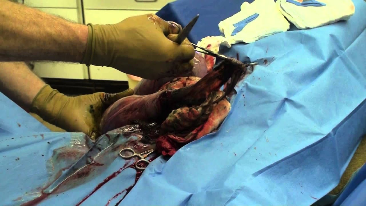 Graphic WARNING Mastiff C Section High Definition