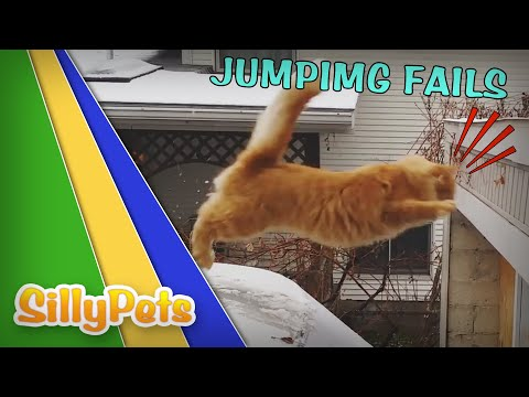 SO FUNNY - JUMPING CATS FAILS COMPILATION!