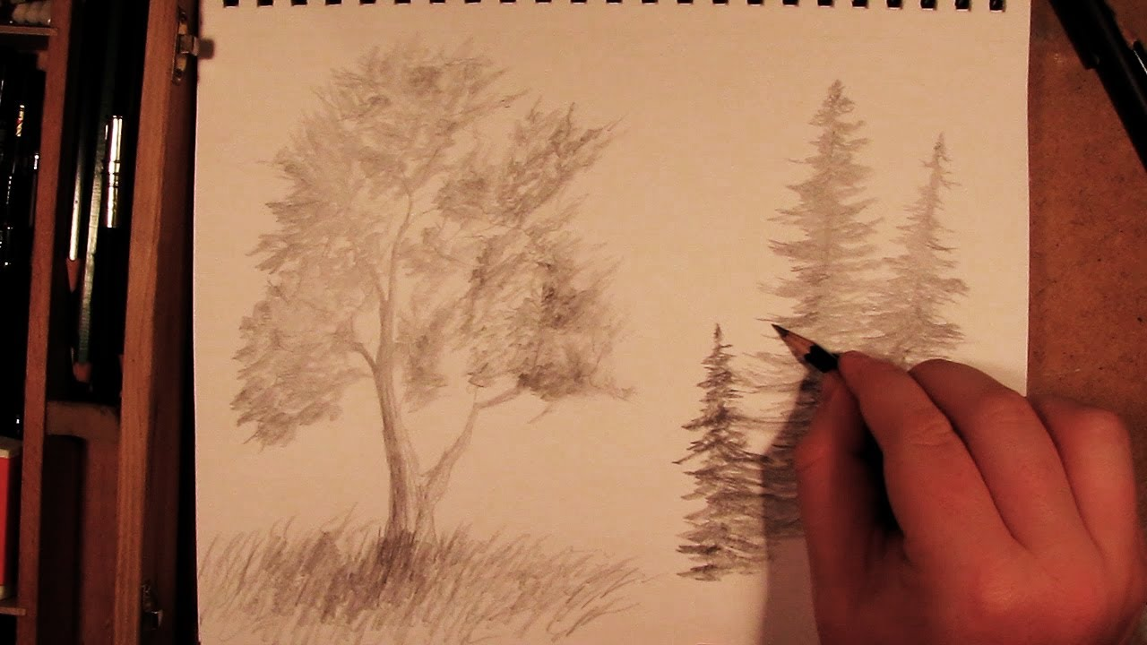 how to draw a tree youtube