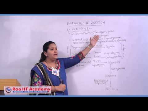 Physiology of Digestion - NEET AIPMT AIIMS Zoology Video Lecture [RAO IIT ACADEMY]