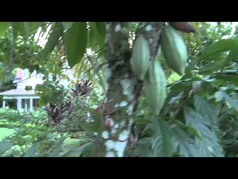 Affordable St. Lucia -- Fond Doux Holiday Plantation   Caribbean Travel + Life