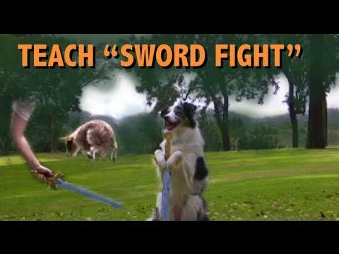 Sword Fighting For CANINE FREESTYLE - Dog Tricks Tutorial by KIKOPUP