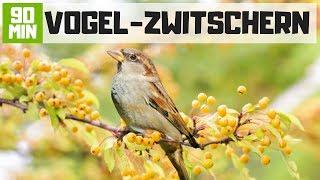 Vogelgezwitscher Zum Entspannen - 90 Min Deutsche Vögel Im Garten Am Morgen