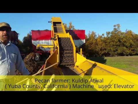 Punjabi farmer in California | Pecan harvesting | Kuldip Atwal | Sarbdeep Atwal
