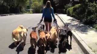 The Good Dog Minute 4/17/12: Laura's 12 Dog Pack Walk
