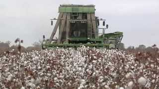 Cotton Harvest A Family Affair On One South Georgia Farm