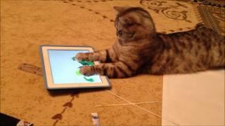 #котиграетнапланшете. Продвинутый кот Ричи #catandgames