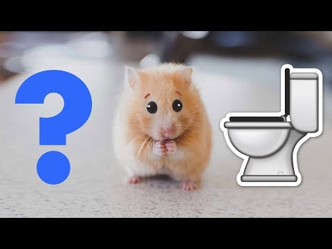 Flushing my emotional support hamster down the toilet
