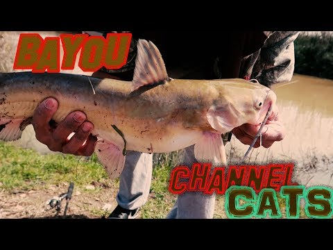 Bayou Fishing For Channel Catfish/Multi Species🚦 (ACTION FROM A HIGHWAY)
