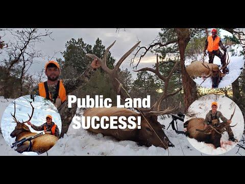 4 Bulls Down in One Day! DIY Colorado Elk Hunt (OTC Tag) 2020 | UNTAMED ADRENALINE