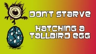Don't Starve || How to Hatch a Tallbird Egg