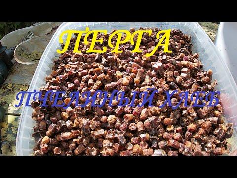 Перга - хлеб пчелиный. Состав и полезные свойства.  Как извлечь пергу из сота.