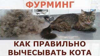Фурминг в Уфе - Как правильно вычесывать кота