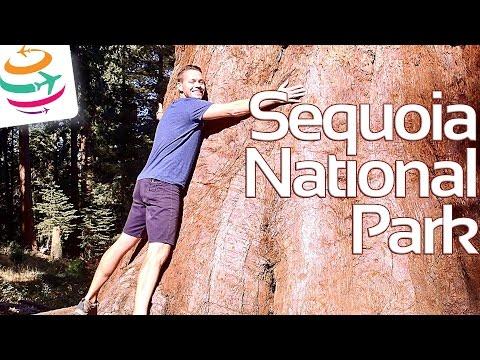 Sequoia National Park die größten Bäume der Welt | GlobalTraveler.TV