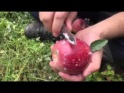 Wachsschicht Apfel