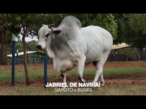 LOTE 01 - JABRIEL DE NAVIRAÍ