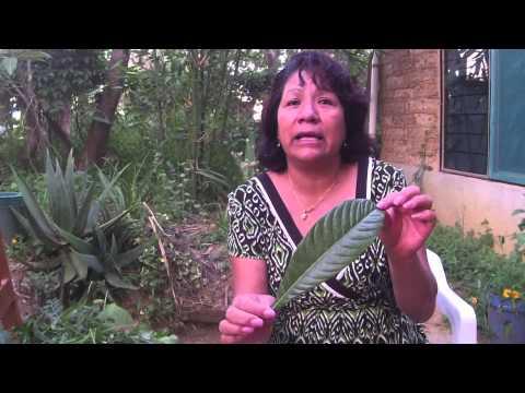 Virginia Martínez Pérez medicinal plants Part 1 / plantas medicinales, Parte 1