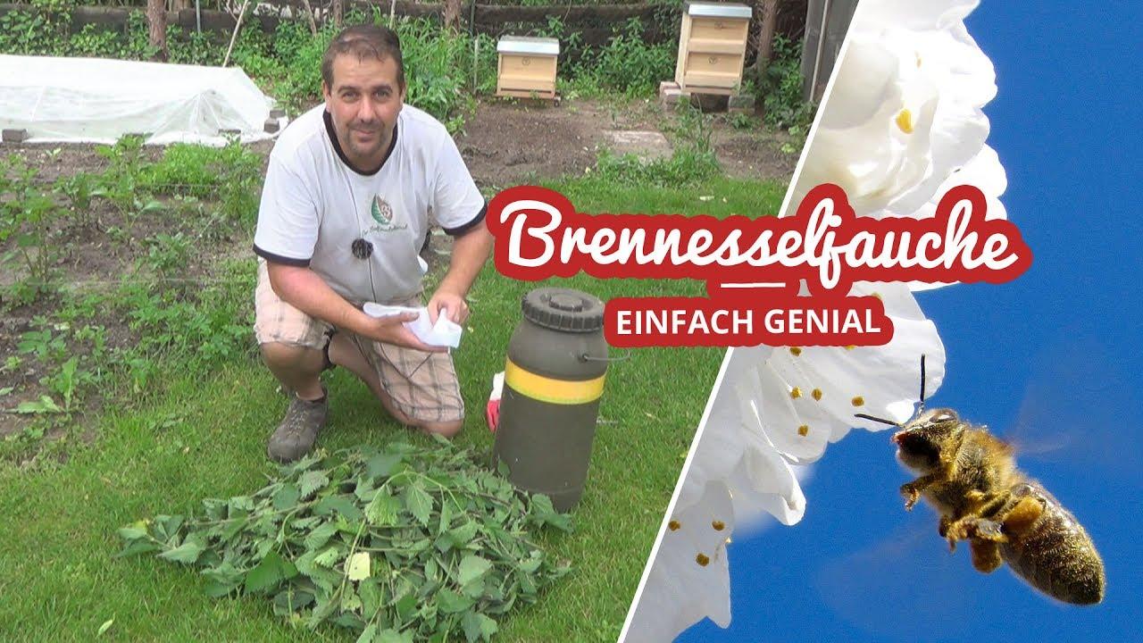 Brennesseljauche herstellen | Naturdünger DIY Artikelbild