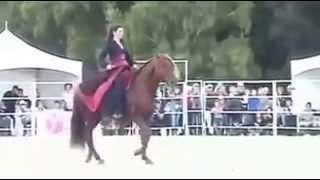 هل هي روعة الحصان أم روعة هذه الفارسة الاردنية ؟